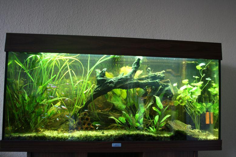 s wasser 180l gesellschaftsbecken aquarium forum. Black Bedroom Furniture Sets. Home Design Ideas